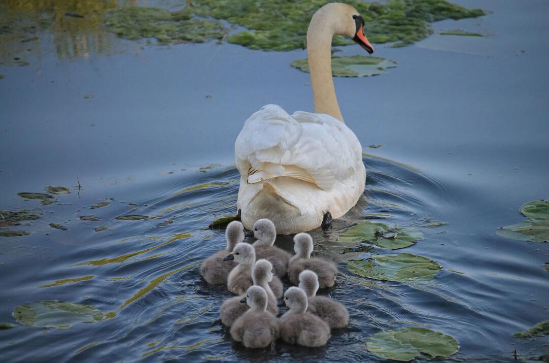 Familie und Beruf vereinbaren